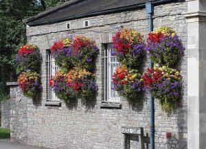 گل کنار در خانه