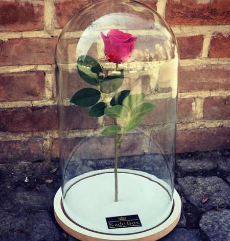 گل رز جاودان دیو و دلبر