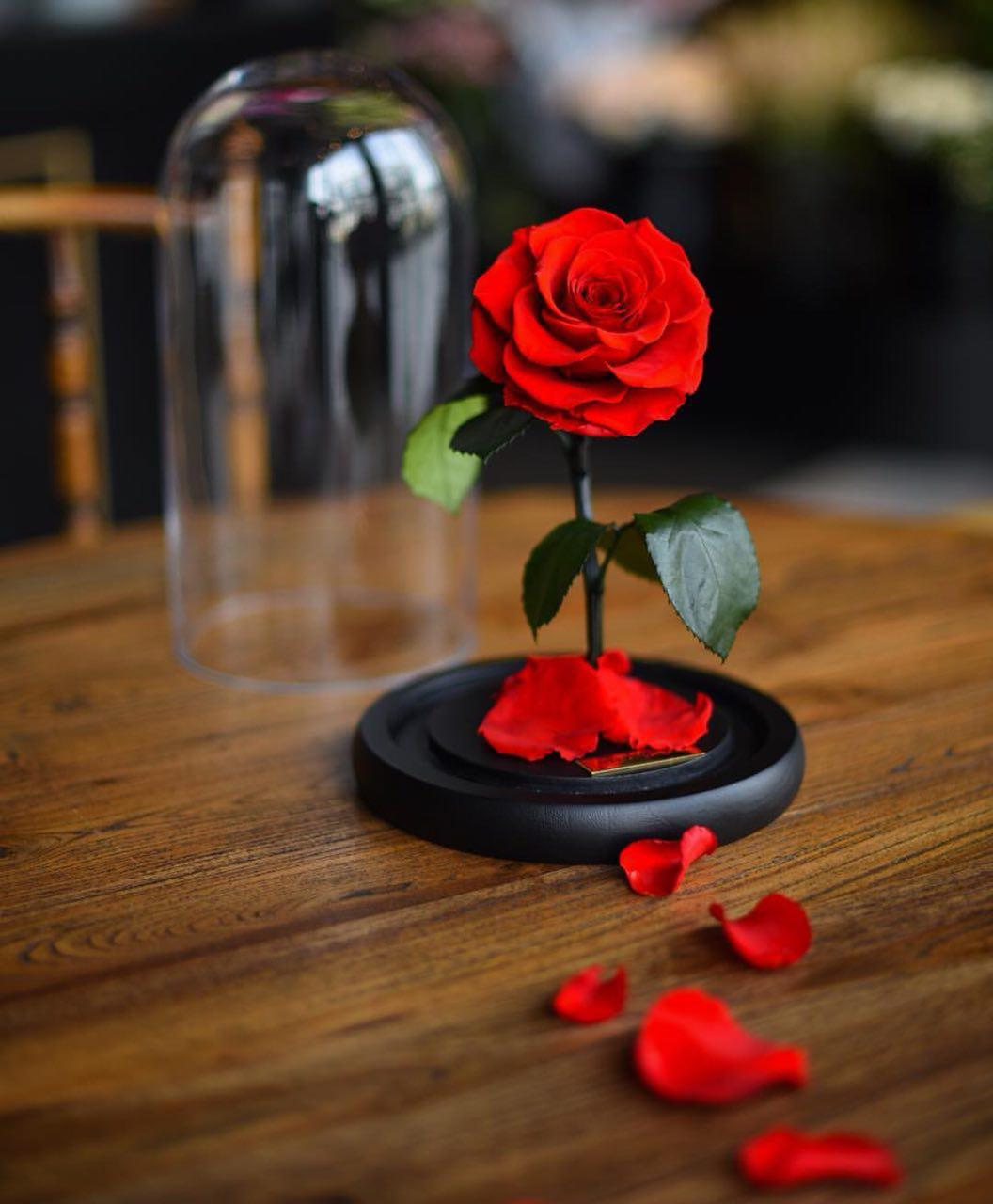 گل رز جاودان همراه با شاخه و برگ طبیعی جاودان